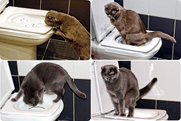 Инструкция как приучить кота к