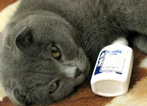 Чем вылечить насморк у котенка в домашних условиях