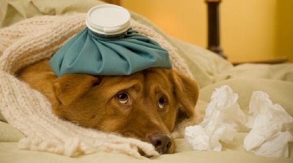 Чем лечить понос и рвоту у собаки, причины сильной