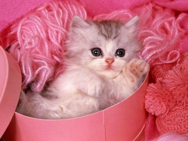 В подарок котенок