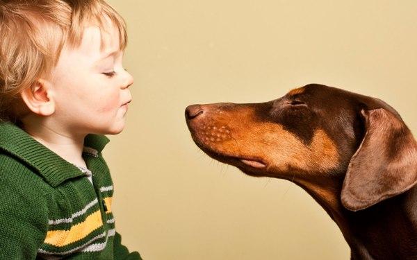 Ребенок боится собак (кинофобия) Причины, как