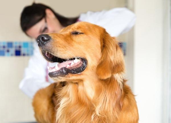 Почистить параанальные железы у собаки в домашних условиях