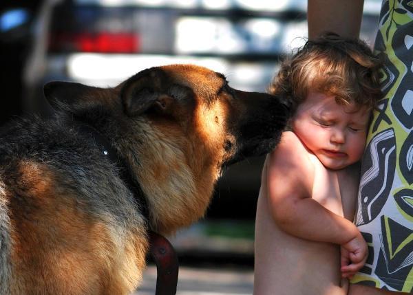 Боюсь соседскую собаку что делать