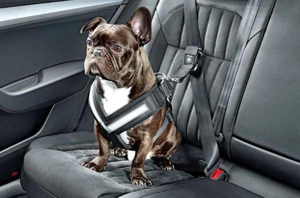 Аксессуары для собаки в машину