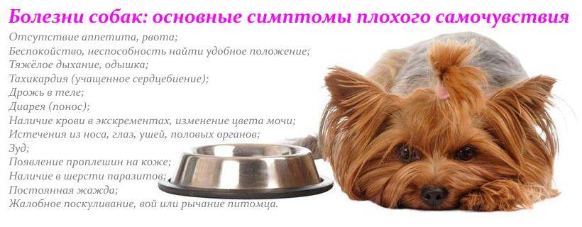 Купить сухой корм для кошек в интернет-магазине товаров