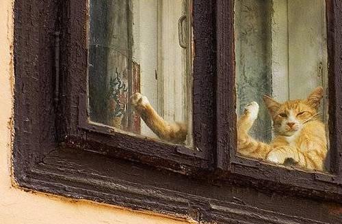 Купание кошек - Зооклуб