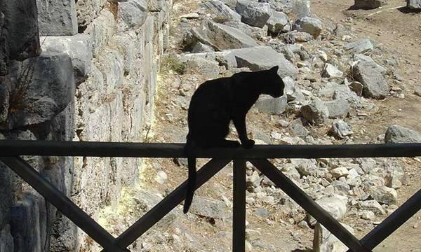 кошки предсказывают землетрясения